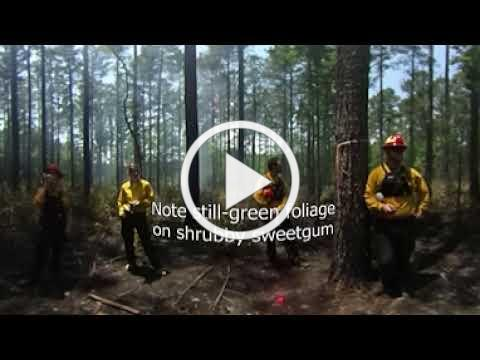 Hill Forest Tract 34 - Prescribed Burn Virtual Field Tour