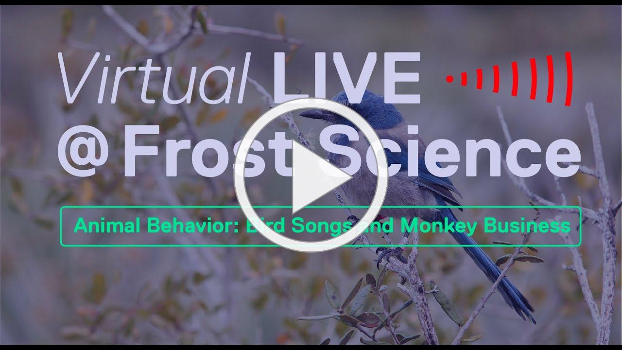 Virtual LIVE@Frost Science - Animal Behavior: Bird Songs and Monkey Business