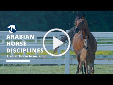 Arabian Horse Disciplines