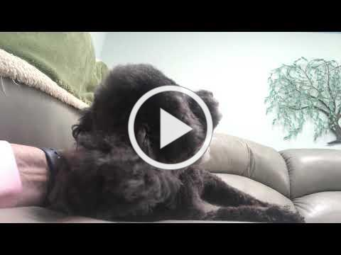 """SENIOR DOGS Tongues andTales """"Sally"""""""