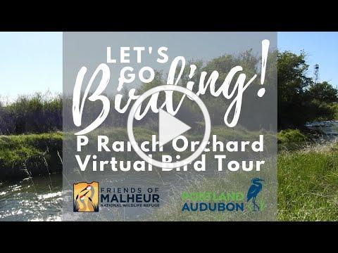 Let's Go Birding: Malheur NWR P Ranch Orchard