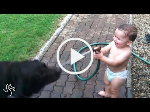 Babies Laughing At Pets | The Dodo