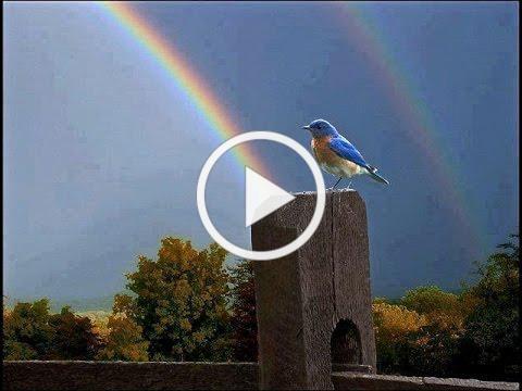 Somewhere Over the Rainbow / What a Wonderful World - Israel Kamakawiwo'Ole with lyrics