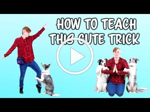 Teach your dog to hug you - dog trick tutorial