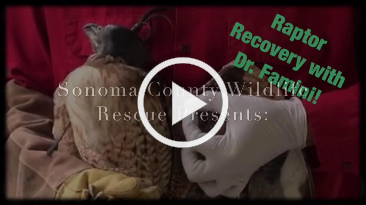 A Tour Of Our Raptor Recovery Center