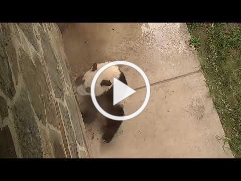 #PandaStory: A Splashing Good Time