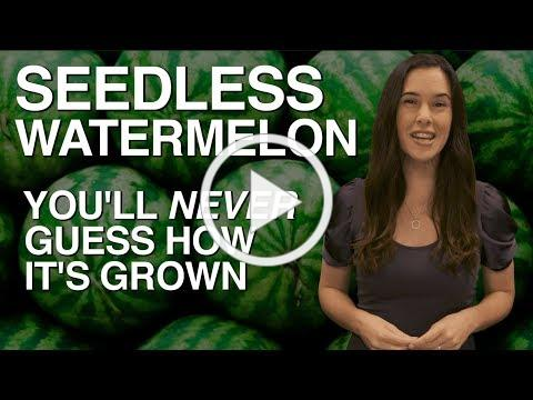 SEEDLESS Watermelon - You'll Never Guess How It's Grown