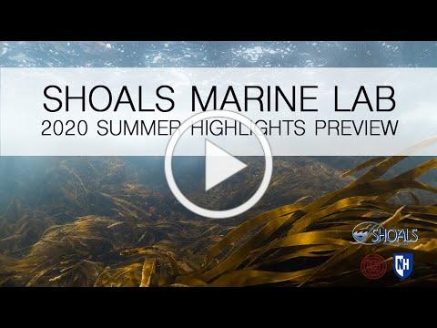 SML 2020 Summer Highlights Preview