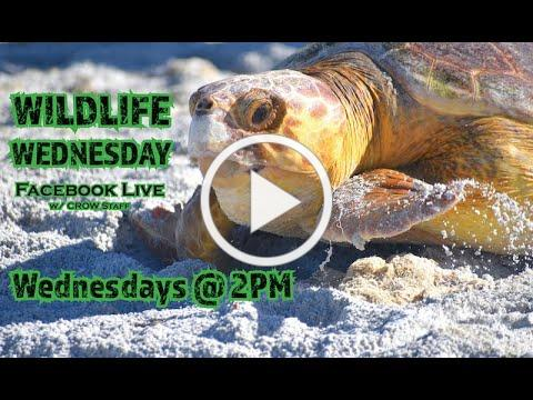 Wildlife Wednesday - Ep.6: Sea Turtles