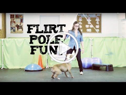 Flirt Pole Fun- Training with a flirt pole