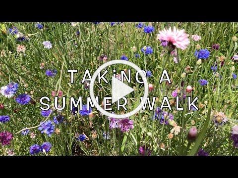 Taking a Summer Walk