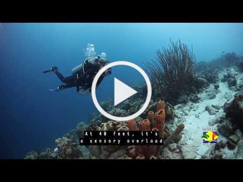 Buddy Dive Bonaire, Top 5 dive sites: Buddy's Reef