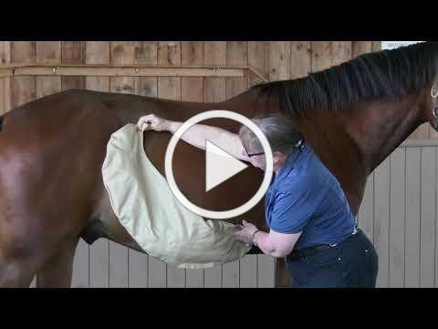 Journey Through the Horse's Digestive Tract - Teaser