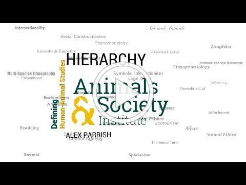 Defining Hierarchy with Alex Parrish - ASI's Defining Human-Animal Studies 33