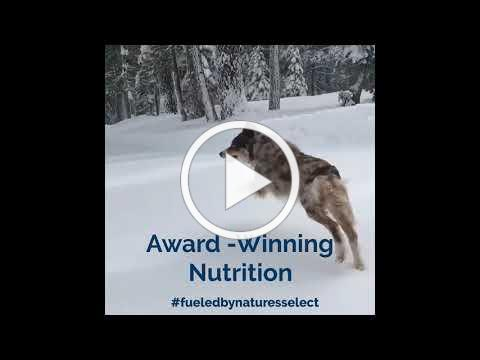 Lucky Ski Dog fueled by Nature's Select