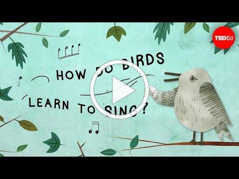 How do birds learn to sing? - Partha P. Mitra