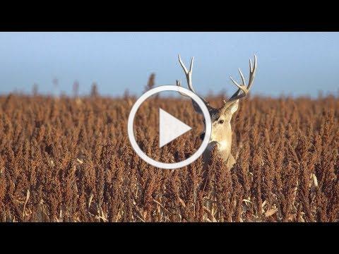 Playas Work for Kansas: All Sorts of Wildlife
