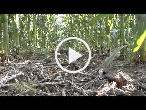 Cutting Fertilizer Input Costs #865 (Air Date 11/2/14)