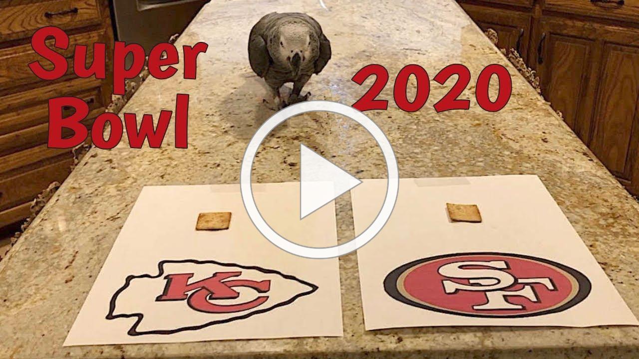 Einstein Parrot Predicts Super Bowl 54 (2020) Winner