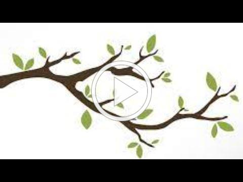 Leafing Out, Episode 1: Tree Appreciation with Dr. Bruce Allison