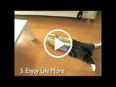 10 New Year's Resolutions As Told by Cats So Funny