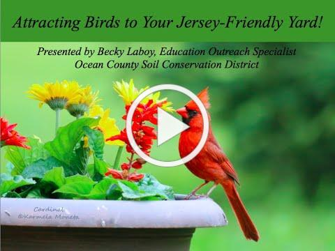 Attracting Birds to Your Jersey Friendly Yard
