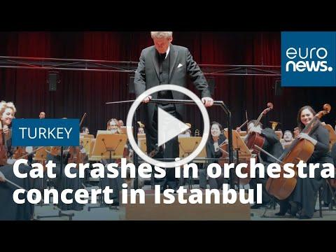 Cat crashes in orchestra concert in Istanbul