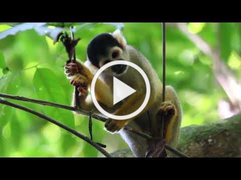 Programa Paisajes Sostenibles de la Amazonia