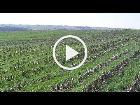 Cover Crop Economics - 2021 Virtual Cover Crop Boot Camp