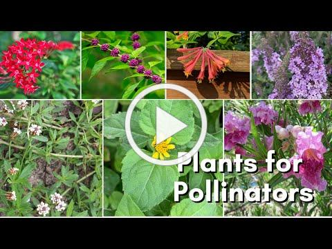 Create Pollinator Paradise