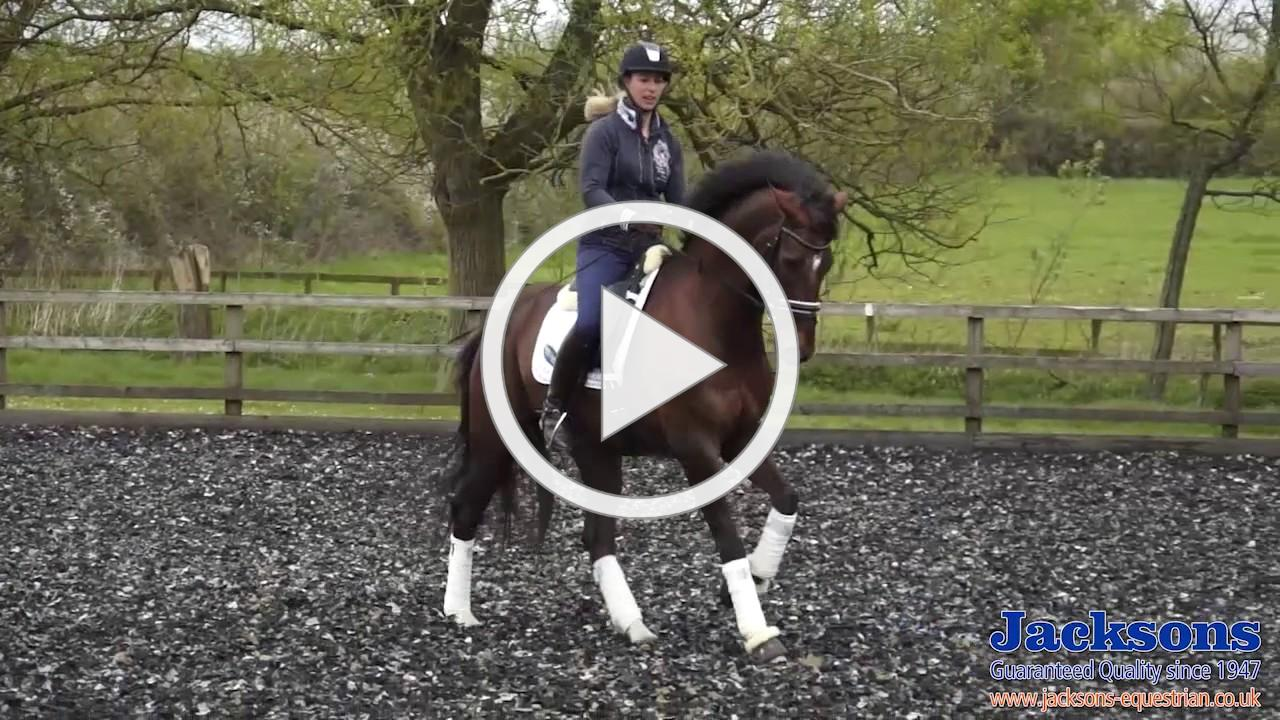 How to start the flying changes dressage