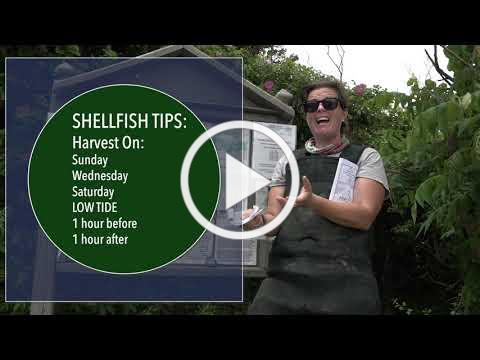 Learn to Shellfish | Episode 1, Getting Started