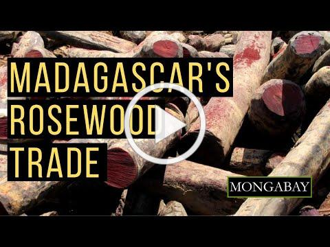 Madagascar Seeks to Sell Seized Stockpiles of Illegal Rosewood