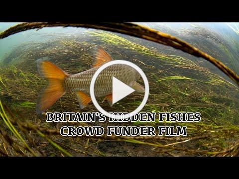 BRITAIN'S HIDDEN FISHES - CROWD FUNDER