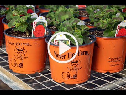 Never Tire Farm: Hope in a Box