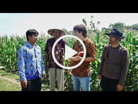 Global Yield Gap Atlas: Indonesia looks to Nebraska to address yield gap