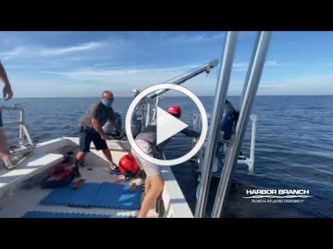 FAU Harbor Branch Scientist Deploys Novel Lake-bottom Benthic Lander