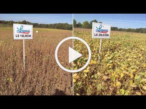 LLGT27 soybeans