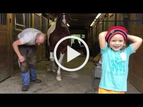 Access Equestrian