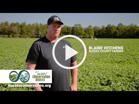 Blaine Hitchens plants cover crops to improve soil health