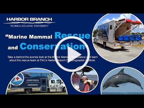 Marine Mammal Rescue and Conservation at FAU's Harbor Branch