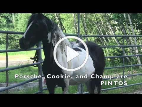 RTT Horse Colors