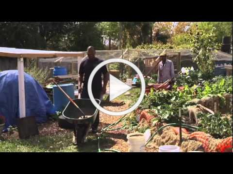 Urban Roots Trailer