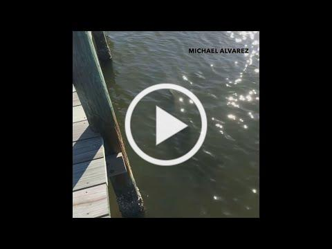 3 large sawfish spotted in Indian River