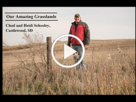 Our Amazing Grasslands ~ Schooley Ranch