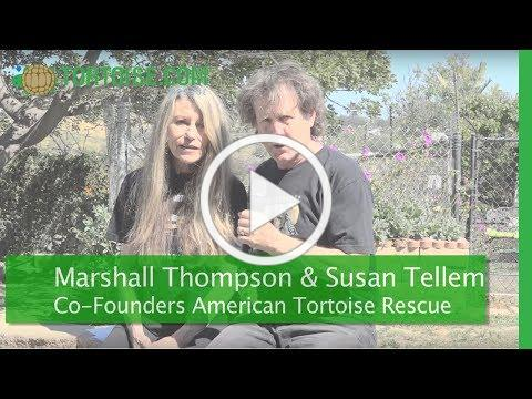 World Turtle Day® Video