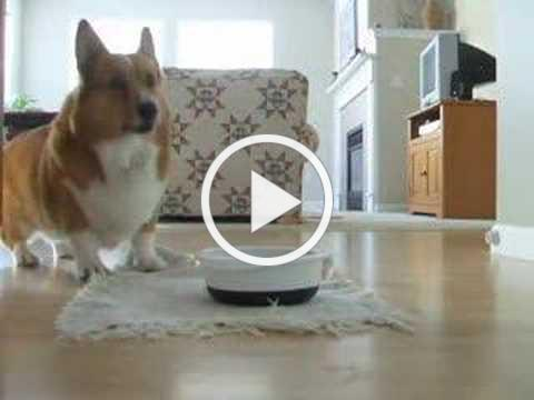 The Best of Sparky Kibble Dancing