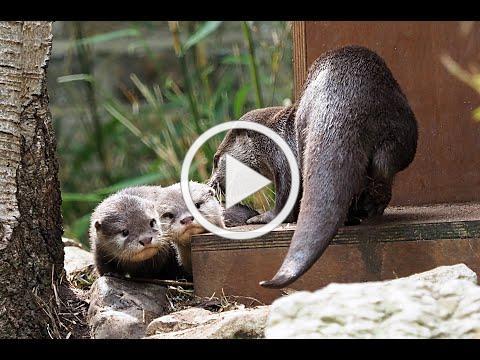 ZooBorns Top 10 Newest & Cutest Baby Animals (Vol. 2)