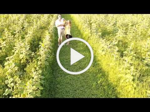 Summer of Sunflowers 2020 at Burnside Farms - Nokesville, VA