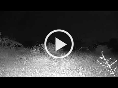 Africam - Cateye Live Stream